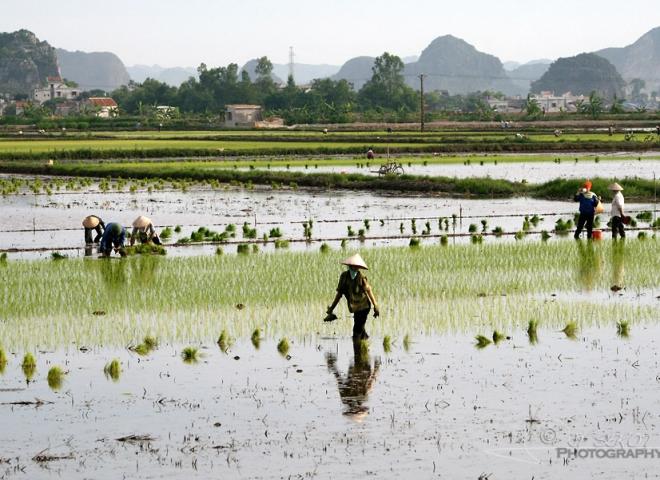 Pose syndicale – Viêt Nam