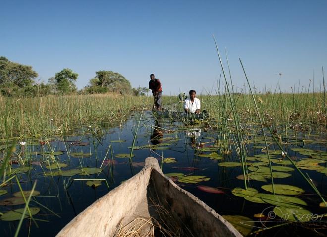 Delta de l'Okavango 3 / 5