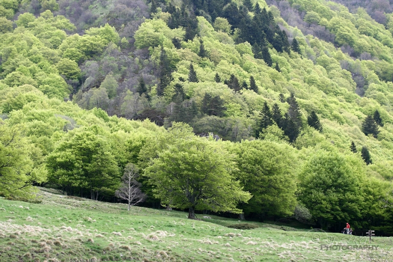 Hêtraie de la vallée de Chaudefour – France