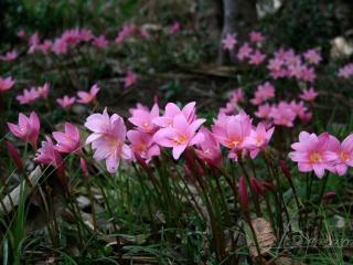 From Darjeeling – Inde