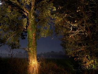 Quercus robur – France