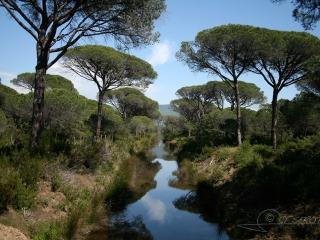 Pinède méditerranéenne, Massaciuccoli – Italie
