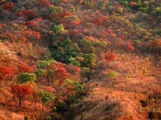 Vallon forestier – Malawi