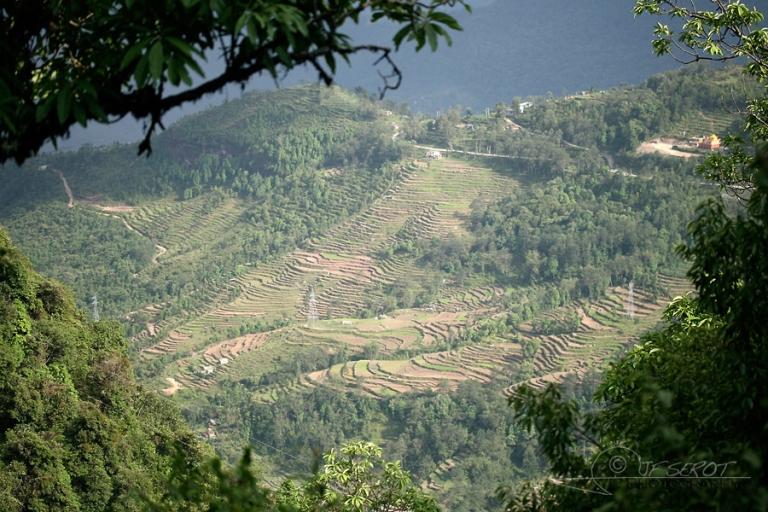 Versant du riz – Népal