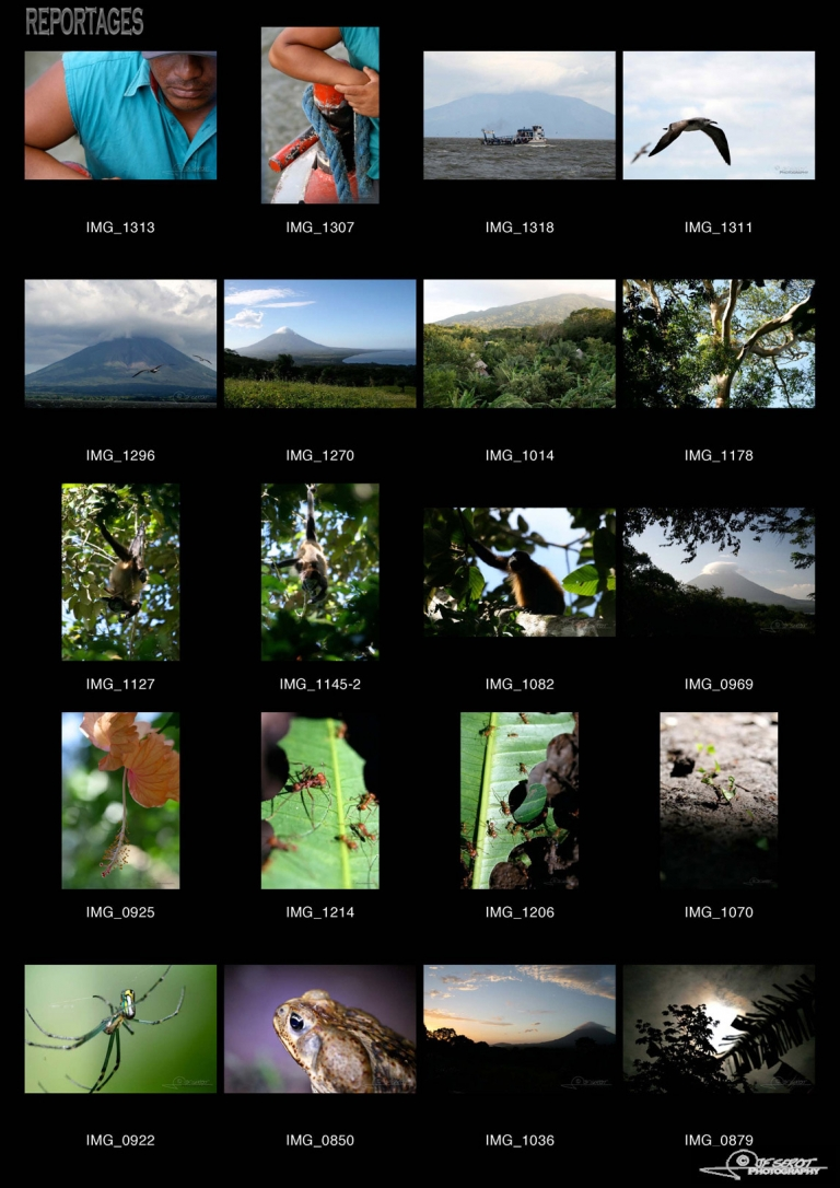 Forêt tropicale, Isla Ometepe – Nicaragua
