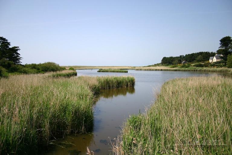 Lagune et roselière – France