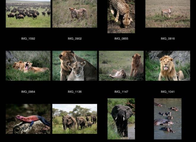 La plaine du Serengeti – Tanzanie
