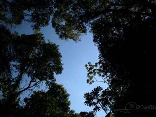 Forêt guatémaltèque / Guatemala