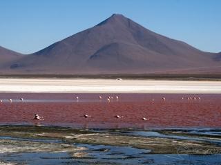 Flanant rose / Bolivie