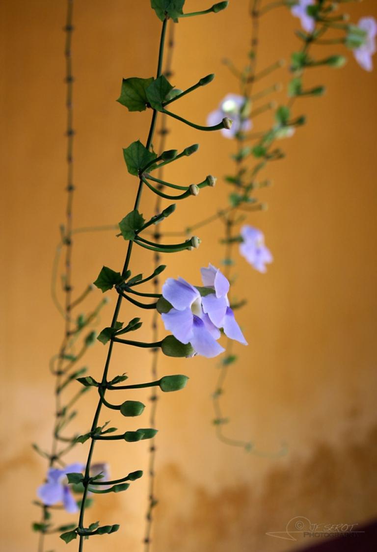 Flower – Viêt Nam