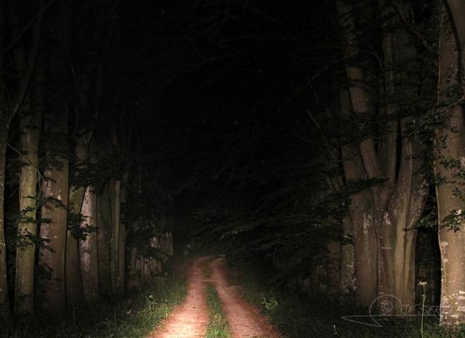 Chemin nocturne – France