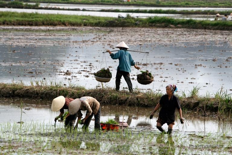 Les pieds dans l'eau / Viêt Nam