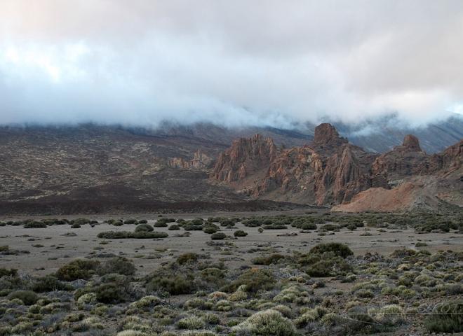 Végétation du volcan Teide à Tenerife – Canaries