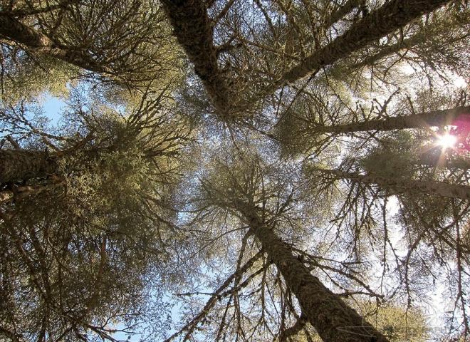 Cédraie, Parc national d'Ifrane – Maroc