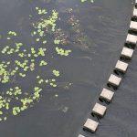 Inventaire des zones humides, détermination d'indices biologiques, etc.